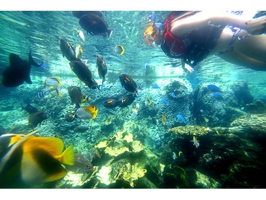 PICグアム/泳げる水族館