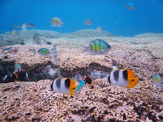 熱帯魚イメージ 写真提供:グアム政府観光局