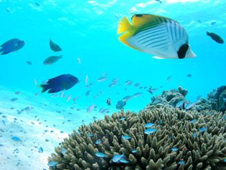 サイパン マニャガハ島