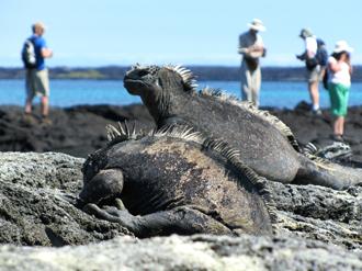 野生動物の楽園ガラパゴス諸島満喫の休日 9日間