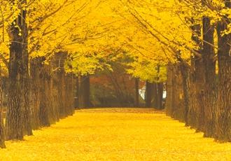 気候が落ち着き、観光に最適な秋の韓国へ。