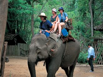 ゾウ乗り体験