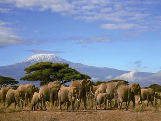 キリマンジャロの朝焼けとケニアハイライト・サファリ満喫 8日間