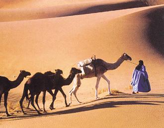 サハラ砂漠(モロッコ)