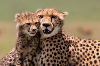 動物の楽園タンザニア サファリ満喫 8日間